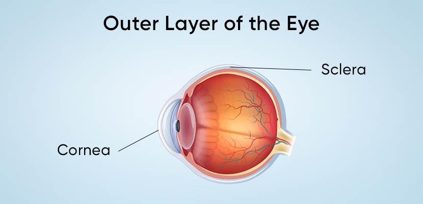 Outer Layer of Eye