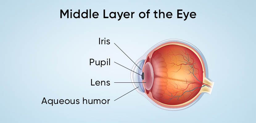 Middle Layer of Eye
